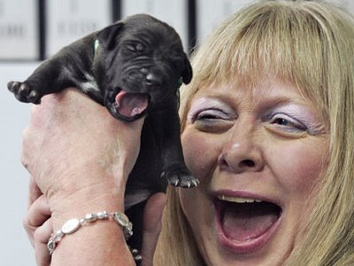Los primeros perros clonados por encargo
