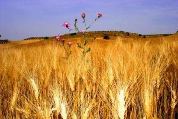 Los riesgos de una mayor demanda de biocombustibles