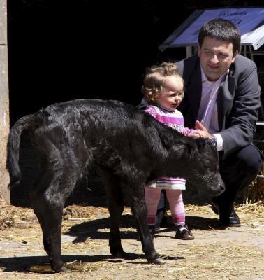 Got, el primer toro bravo clonado, cumple 10 meses.
