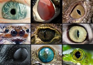 La evolución del ojo en la naturaleza.