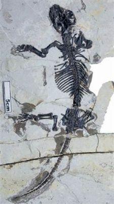 Un fósil mejora el conocimiento evolutivo del oído de los mamíferos