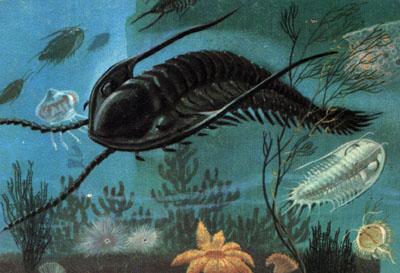 Los trilobites y sus técnicas de defensa.