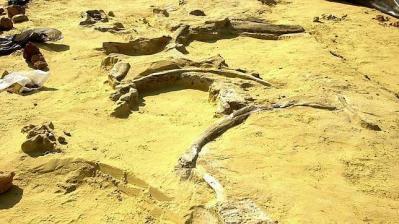 Los humanos emigraron desde África a través de Arabia, no por Egipto como se creía.