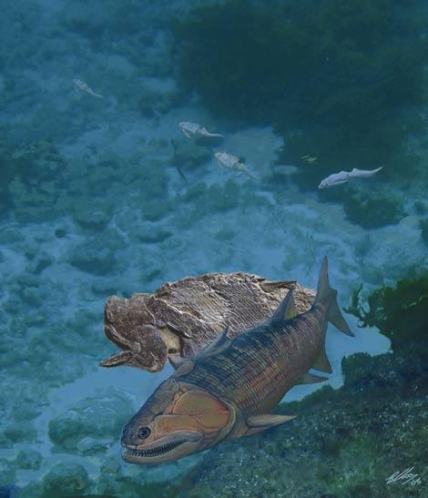 Halla al fósil más antiguo de un pez mandibulado