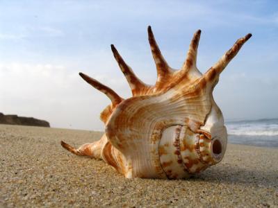 Rastreando la evolución de la inteligencia en los moluscos