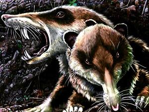 Hallan el fósil de una ardilla con dientes de sable en Argentina