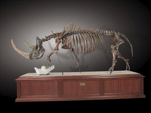 Nueva especie de rinoceronte lanudo da nuevas pistas sobre la Edad del Hielo.