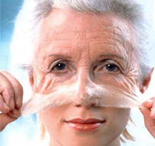 Descubiertos nuevos hallazgos sobre el envejecimiento celular