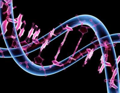 Secuenciando el genoma de un humano de hace 4.000 años