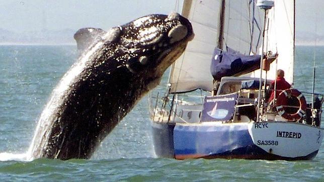 Las ballenas, estresadas por el ruido en los océanos