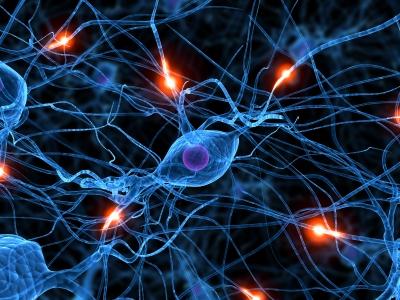 Descubren un compuesto que ayuda en la expansión de células madre neurales.