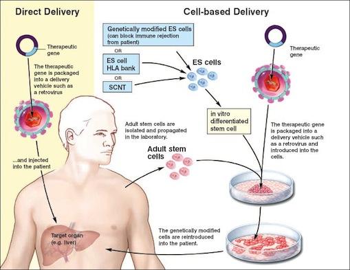 Una terapia genética eficaz para combatir la hemofilia B